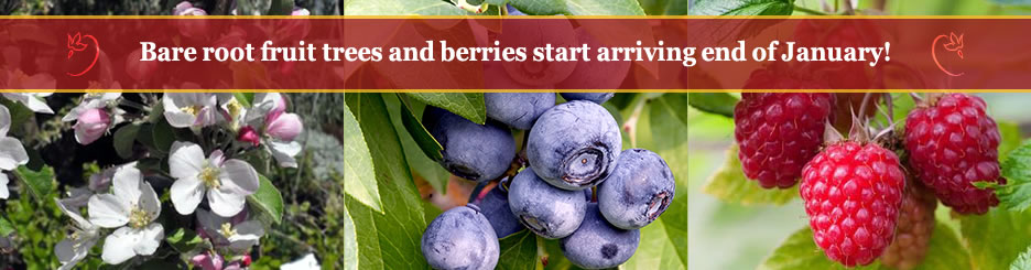 Bare Root Fruit Trees and Berries start arriving end of January!