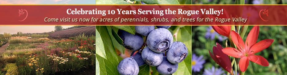 Celebrating 10 years serving the Rogue Valley! Come visit us now for acres of perennials, shrubs, and trees for the Rogue Valley