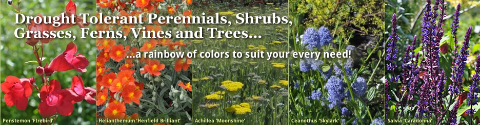 Drought tolerant perennials, shrubs, grasses, ferns, vines and trees -- locally grown plants, plant advice, landscape design, gardening classes, free delivery in Central Point