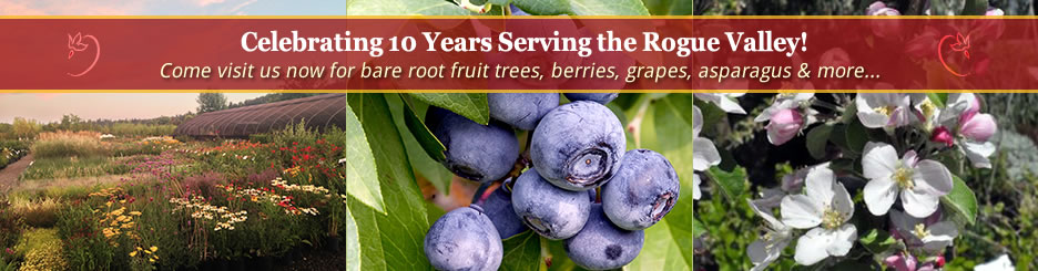 Celebrating 10 years serving the Rogue Valley! Come visit us now for bare root fruit trees, berries, grapes, asparagus and more...