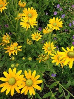*The Birds and the Bees: Attracting Pollinators to Your Garden