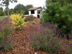 *Drought tolerant display garden tour