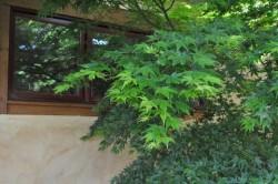 *Natural Pruning