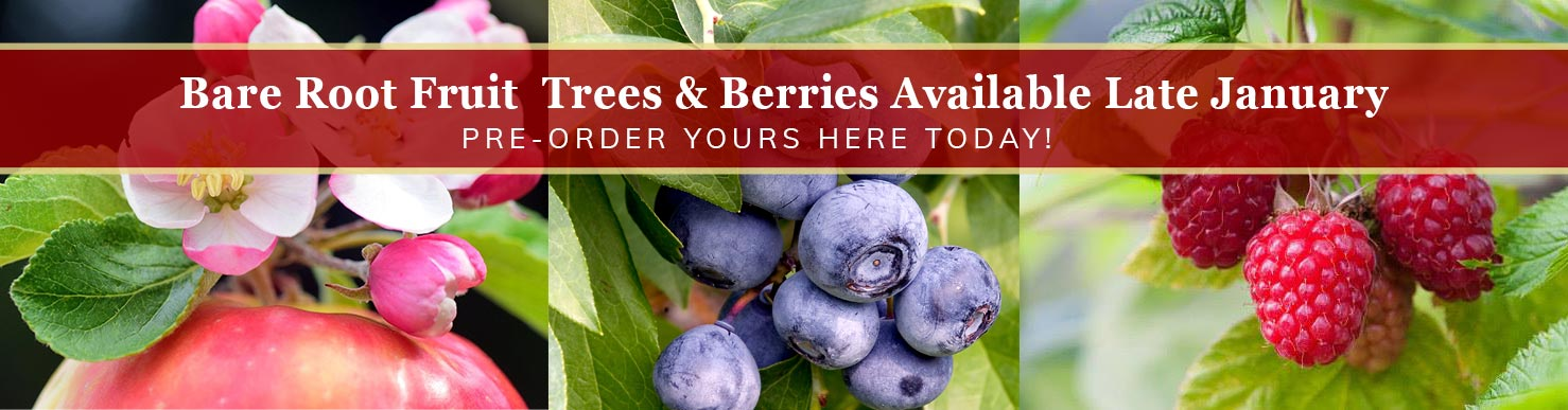 Bare root fruit trees and berries available late January - Pre-Order Here Today