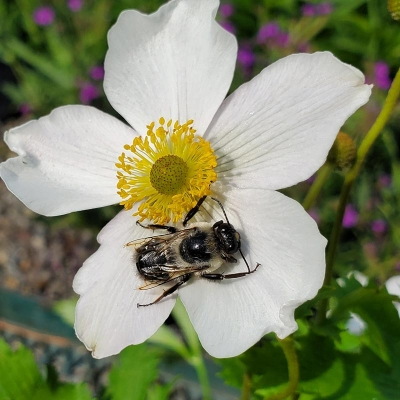 CANCELLED  'Gardening for Pollinators' with Kristina and Christie